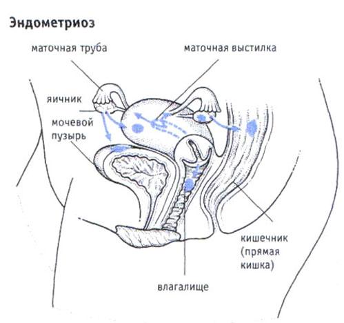 Что происходит с маткой во время оргазма путем прямого стимулирования клитора