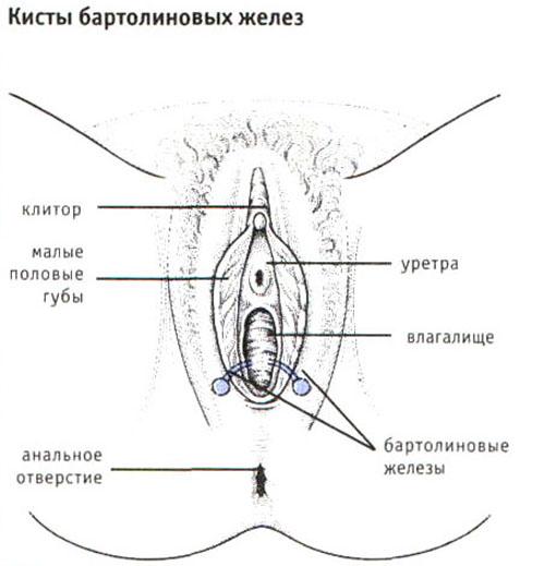 vospalilsya-limfouzel-vo-vlagalishe