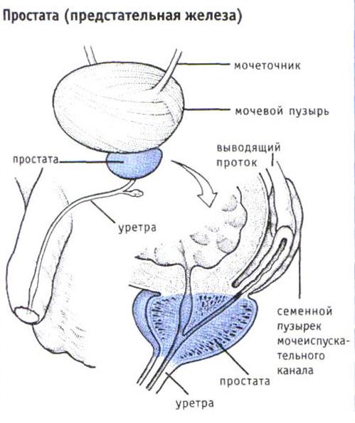 Иммунотерапия при лечении рака предстательной железы